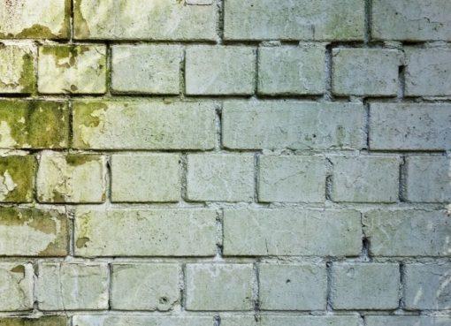 Mauerwerk mit Schimmelbefall