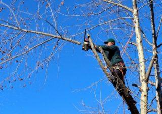 Baumschnittarbeiten