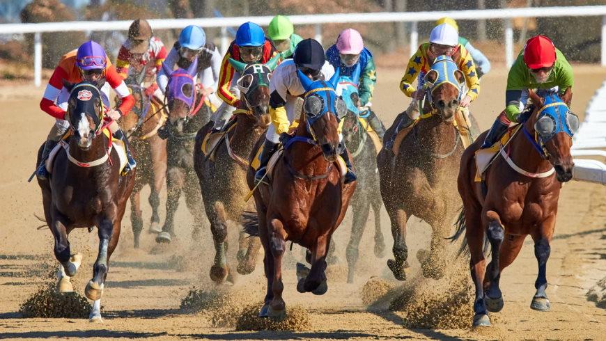 Faszination Pferderennsport