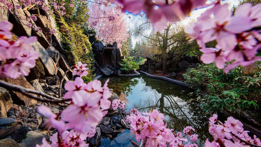 Japanischer Fels- und Wassergarten